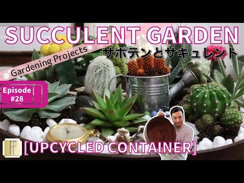 C2TJ3R7ZxKwjeRIIRqYXTkplxBHCznDMlHeFJy dfEQ - How to Make Succulent World Cuter - home, hobbies