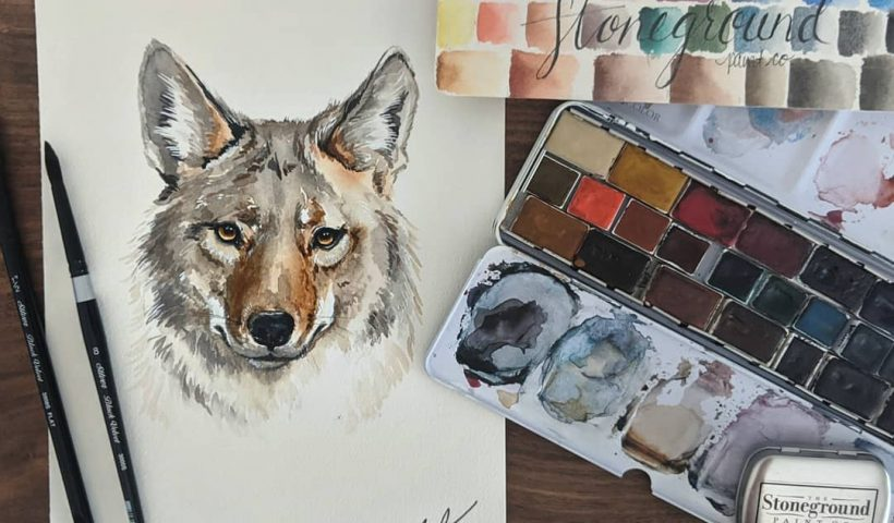 iesmyvvvy3l41 820x480 - It's coyote breeding season here, so they are everywhere, and so pretty! - hobbies, crafts