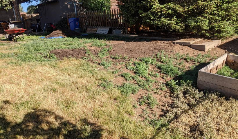 y2lnun0beb151 820x480 - How do I get rid of this patch of weeds without spraying roundup? - home, hobbies