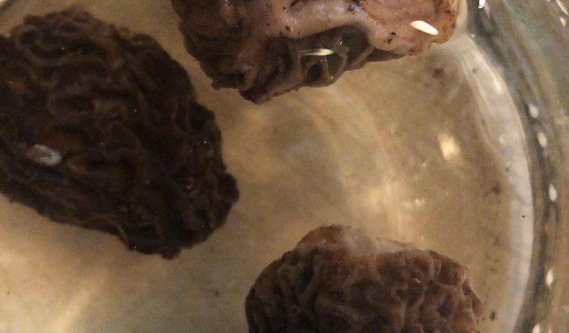 vur4NTcj35RIEYfdniwrd8e 9 lgiJqGBA91WeKnSow 820x480 - Soak morel mushrooms in water to remove worms - home, hobbies