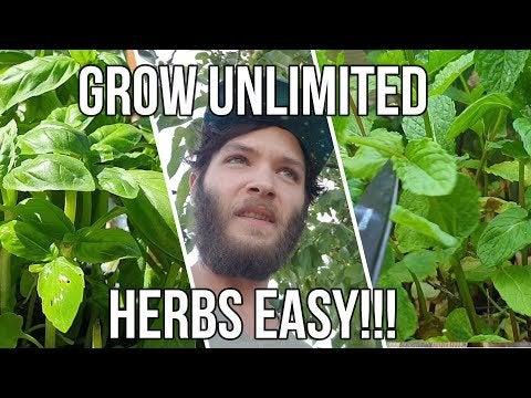 N8tLRHTFvXW1fqqiX9YHnv3KSLoOkNWQMfqN2RswLQU - How to Grow Unlimited Herbs EASY ! - home, hobbies