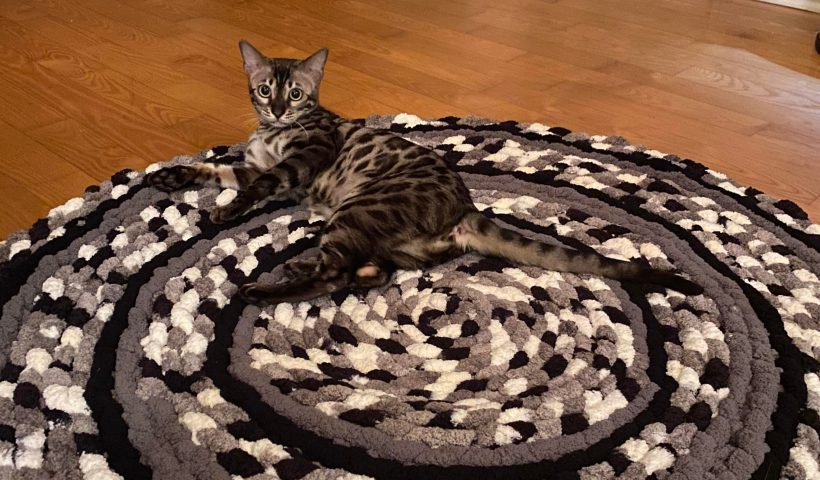 27522711g0p51 820x480 - Circulaire thick carpet. My cat makes my house look so fancy - hobbies, crafts