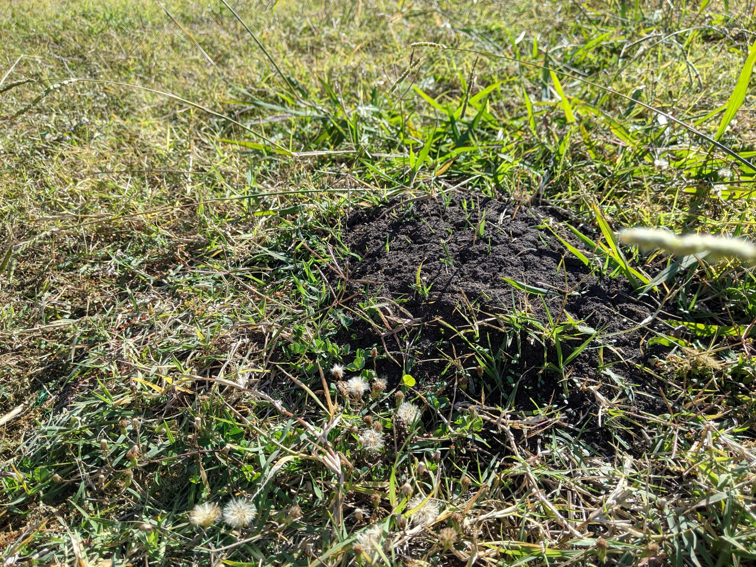 maav7ln843x51 scaled - How to get rid of these anthills in my backyard safely. - home, hobbies